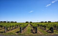 WYNNS COONAWARRA ESTATE 1 (Nigel Bewley) Tags: november sky clouds vineyard vines wine australia winery grapes southaustralia viniculture unlimitedphotos wynnscoonawarraestate november2014