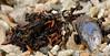Shells from a beche (knutsrensen) Tags: skjell 5fotografi