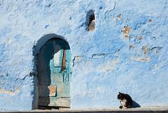 Chaouen (F. Nestares) Tags: door cat gato chaouen marruecos explored chechaouen