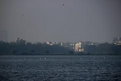 Pelican's (PrabhuKrishnan) Tags: pelicans nature wildlife ngc bangalore birding earlymorning natgeo madiwalalake canon600d