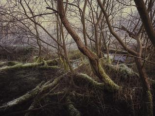 Thetford Forest 30_12_14