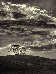 Ascent (mikeSF_) Tags: california county bw tree grass clouds landscape mono blackwhite 645 pentax cloudy duo hill rays brentwood antioch hdr ascent crepuscular toning contracosta 645d mikeoria a80160 wwwmikeoriacom