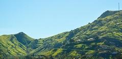 Blue Mountain in January (bratulin) Tags: california houses sky mountain green grass hill palmtrees colton rialto bluemountain sanbernardino lomalinda inlandempire windingpath sanbernardinocounty grandterrace