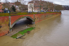 tiny island? (David B. - just passed the 7 million views. Thanks) Tags: city bridge france river town flooding flood riviere rivière pont toulouse riverbank garonne floods ville inondation flooded a77 crue tounis hautegaronne midipyrénées 1650 floo floodings garonnette a77v sonyalpha77 sony165028ssm sonydslta77v