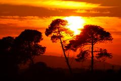 Magic sunset (Lucio Busa) Tags: sunset red italy tree nature silhouette alberi backlight sunrise wonderful landscape landscapes amazing tramonto alba awesome sigma natura rosso paesaggi calabria paesaggio controluce forme lowlights naturalistic naturalistica sonyalpha