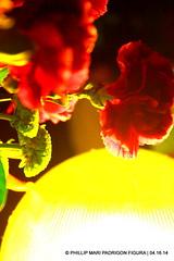 SAN JUAN EVANGELISTA (phimphim09171) Tags: wood sanjuan generator bicol semanasanta evangelista goldleaf apostol holyweek carroza 2014 karosa carnationflower disipulo