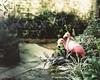 Private Garden (David Fortner: Photographer) Tags: mamiya film beautiful mediumformat kodak flamingos 6x7 rz67 portra160 mamiyarz67 pushedfilm filmisnotdead buyfilmnotmegapixels staybrokeshootfilm