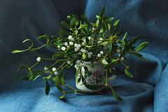 (m.universal) Tags: plants nature beauty flora nikon vase mistletoe manual naturmort   helios44m4  d80   viscum     manuallenses  80  manualoptic