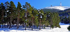 Le Mont Ventoux  (Vaucluse,France) (Malain17) Tags: winter sky panorama snow france colors forest french photography photo europa europe flickr shot image pentax couleurs photographers panoramic explore ciel arbres neige provence capture vue fort montagnes montventoux