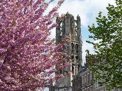 Spring colors (madens) Tags: pink rose spring rouen printemps