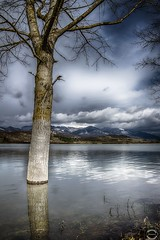 Albero nel lago (JackTorva) Tags: blue winter italy panorama brown white lake mountains reflection tree verde green nature water clouds montagne canon landscape eos reflex italia nuvole blu ngc wide natura 7d albero acqua inverno ultrawide grandangolo bianco paesaggio lazio marrone riflesso 14mm ciociaria samyang canterno grandangolare