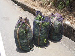 Bags full with tea leafes!