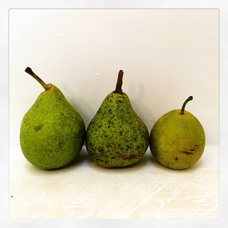 054/365 • a Howell pear, a Williams pear and a Nashi - grown and picked by my dad who I love so much - he's picked more than 50kg of apples in the last few weeks - they are mostly heirloom varieties and super amazing. You might come across some if you are