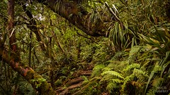 L'enfer Vert (Thibaud Chanfray) Tags: nature reunion de island ngc ile runion fort le sauvage bbour