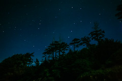 Constellations Over the Trees By the Ocean (Paul T. Marsh/PositivePaul) Tags: longexposure sky color night clouds canon star olympicpeninsula pacificnorthwest rubybeach ultrawide manualfocus 2015 canonef1740mmf4l wwwpaulmphotographycom paulmarshphotography canon5dclassic northwestisbest lightroom5 paultmarsh