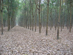 Cu Chi Tunnels of the Viet Cong
