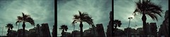 Image-20-(14) (christophe_85) Tags: barcelona city colour tree film beach seaside palm contax g1 sequence filmisnotdead