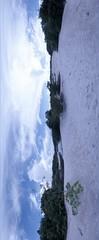 Amazon Rainforest sand desert