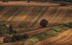 The play of light in the Tuscan countryside (gionatatammaro) Tags: giochidiluce alberi allaperto trees toscany pisa italia grano green nikon campagne