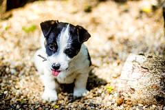 Dog (heiko_leipzig) Tags: dog stones wood