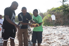 D75_1742 (Andy Kahumbu) Tags: kenya watamu hawksbill turtle rescue localoceantrust turtlerelease seaturtle