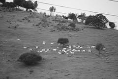 RUTA 78 | LITORAL DE LOS POETAS (verte de frente / arquitecturista) Tags: chile ruta de landscape botes muelle mar los san playa punta antonio 78 litoral aire libre poetas tralca