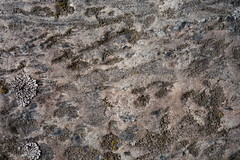 Stein (Pascal Volk) Tags: macro berlin texture closeup pattern struktur makro muster nahaufnahme berlinlichtenberg textur landsbergerallee flickrphotowalk macrotextures macromondays macrodreams sonydscrx100 flickr10photowalk