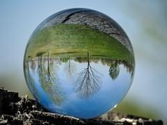 Le monde  l'envers (World upside down) (Joanne Levesque) Tags: bouledeverre glassball reflet reflection paysage landscape arbres trees parc park promenadebellerive montral nikon coolpixp7700