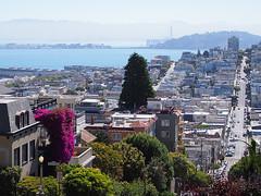 San Francisco (FRAUSCHNERT) Tags: sanfrancisco lombardstreet steil kurvenreich strase sehenswrdigkeit architekturkalifornien sommer hitzewelle roadtrip rundreise mietwagen unterwegs highlights usa amerika westkste hitze heis urlaub frauschoenert reise highwaynr1