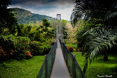 Another Way (kumherath) Tags: sri lanka canon 5dmark3 peradeniya botanical gardens suspension bridge kumari herath photography paradise island