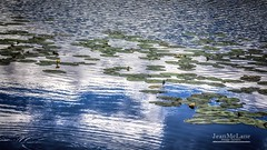 ~~~~ Ripples ~~~~ (Jean McLane) Tags: reflects reflejos reflets water lake lac lago clouds cloudy nenufars