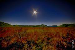 Al chiaro di luna (Rizzi Andrea) Tags: estate luna notturna umbria castelluccio sibillini fioritura