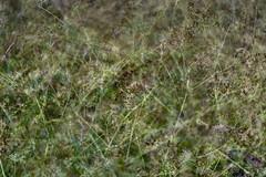 Multiple Nature 340 (pni) Tags: plant multiexposure multipleexposure tripleexposure helsinki helsingfors finland suomi pekkanikrus skrubu pni