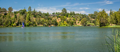 Vasona Lake Panorama (randyherring) Tags: ca nature water outdoor lake recreation sailboat california panorama santaclaracountyparks trees losgatos afternoon sky park boats vasonalakecountypark sailing boat