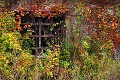 Kitty in the Window (Trotter Jay) Tags: abandonedbuilding cat kitty straycat foliage fallfoliage window holyokema holyoke