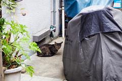 Today's Cat@2016-07-27 (masatsu) Tags: cat catspotting thebiggestgroupwithonlycats pentax mx1