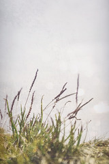 Coastal Grass (Fiona Smith (Prev. Fiona McAllister Photography)) Tags: nature grass coast coastline coastal cumbriacoast cumbriacoastline northwestengland plant photoshop photographicart dof bokeh nikon solway solwaycoast solwayphotography solwayfirth cumbria westcumbria westcoastcumbria art