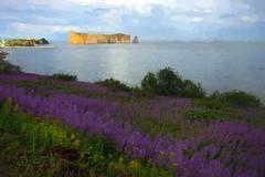Perce Rock with flowers (Camerai) Tags: perce quebec ocean flowers purple