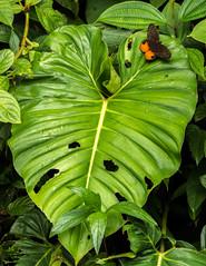 _NGE7590.jpg (Nico_GE) Tags: selvahumedatropical colombia sancipriano pacifico comunidadesafro valledelcauca co