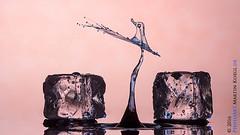 Fly Little Bird (Martin Koegl / www.waterdrop-photography.com) Tags: acqua agua art arte abstract abstrakt animal ave bird canon drop droplet droplets drops dropondrop dropsculpture eau eos eingefroren eis flssig freeze fluid fluidphotoart gota gotas goutte goccia glycerine glyzerin highspeed hochgeschwindigkeit ice kunst liquid liquidsculptures macro makrofotografie photoart sculpture skulptur splash tropfen tropfenfotografie tropfenauftropfen tat tropfenfoto tier vogel wasser water wassertropfen waterdrop waterdroplet waterdroplets waterdrops watersplash