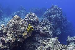 _DSC2043 (sergiollag1) Tags: coral cozumel sponge quintanaroo mexico