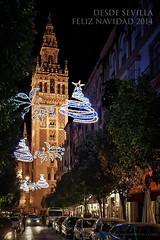 Feliz Navidad a todos mis amigos de Flickr. Merry Christmas to all my Flickr`s friends. (Javier Martinez de la Ossa) Tags: christmas espaa navidad sevilla andaluca nocturna merrychristmas giralda feliznavidad felicitacion mateosgago javiermartinezdelaossa