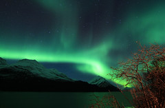 Aurora6 (vic_206) Tags: light sky lake snow mountains tree luz norway arbol lago nieve noruega northernlights montañas borealis tromso auroraboreal canoneos60d tokina1116