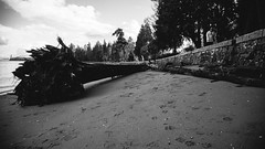 By the Seawall (michaelnugent) Tags: park trees canada tree vancouver canon lens dead eos log sand bc mark columbia seawall ii stanley stump l 5d british 24 mm 105 parc ef
