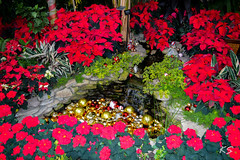 Christmas Waterfalls (Kate Sellig) Tags: christmas flowers trees water floral decoration greenhouse bulbs buffaloanderiecountybotanicalgardens