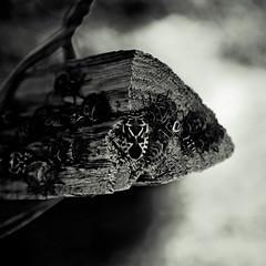 Phyrrhocore-le-Jaune ou le masque du guerrier (  Pounkie  ) Tags: bw vacances mask sombre squareformat insecte masque noirblanc lacorse formatcarr punaiserouge eurydemaornata carrfranais phyrrhocorelejauneoulemasqueduguerrier