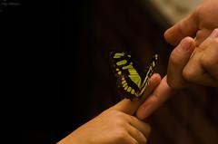 La creacin del equilibrio (Alejo Mateus) Tags: naturaleza nature butterfly colombia nios solidarity childs mariposa solidaridad quindo