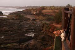 Bali Sunset Cats-2 (Pavlo Kuzyk) Tags: bali nature animal cat canon indonesia animalkingdom