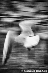 oiseau2_Snapseed (Gabriel Balaci Photographies) Tags: people paris france birds europe fineart colorphotography streetphotography snapshots technicolor rue couleur gens oiseaux urbain blackandwhitephotography photoderue photographienoiretblanc photocouleur photographieartistique instantanés fotografiealbnegru fotografieartistica