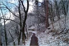 LE TEMPS D'UN HIVER, TERRE D'AUVERGNE (Gilles Poyet photographies) Tags: hiver neige soe chemin forêt auvergne puydedôme autofocus royat leparadis lecolombier aplusphoto chamalières artofimages rememberthatmomentlevel2 lechemindescrêtes